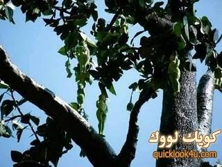 treewoman1