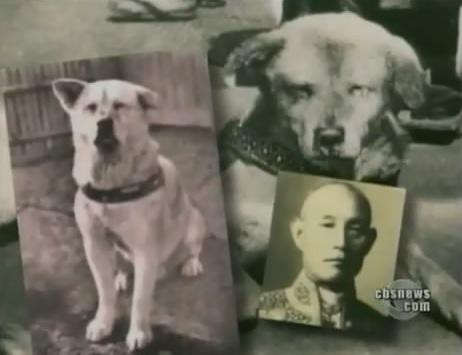 قصة كلب يبهر العالم بوفائه