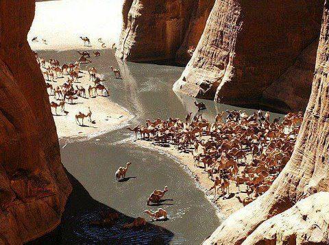 سحر وروعة محمية وادي الجمال في مصر